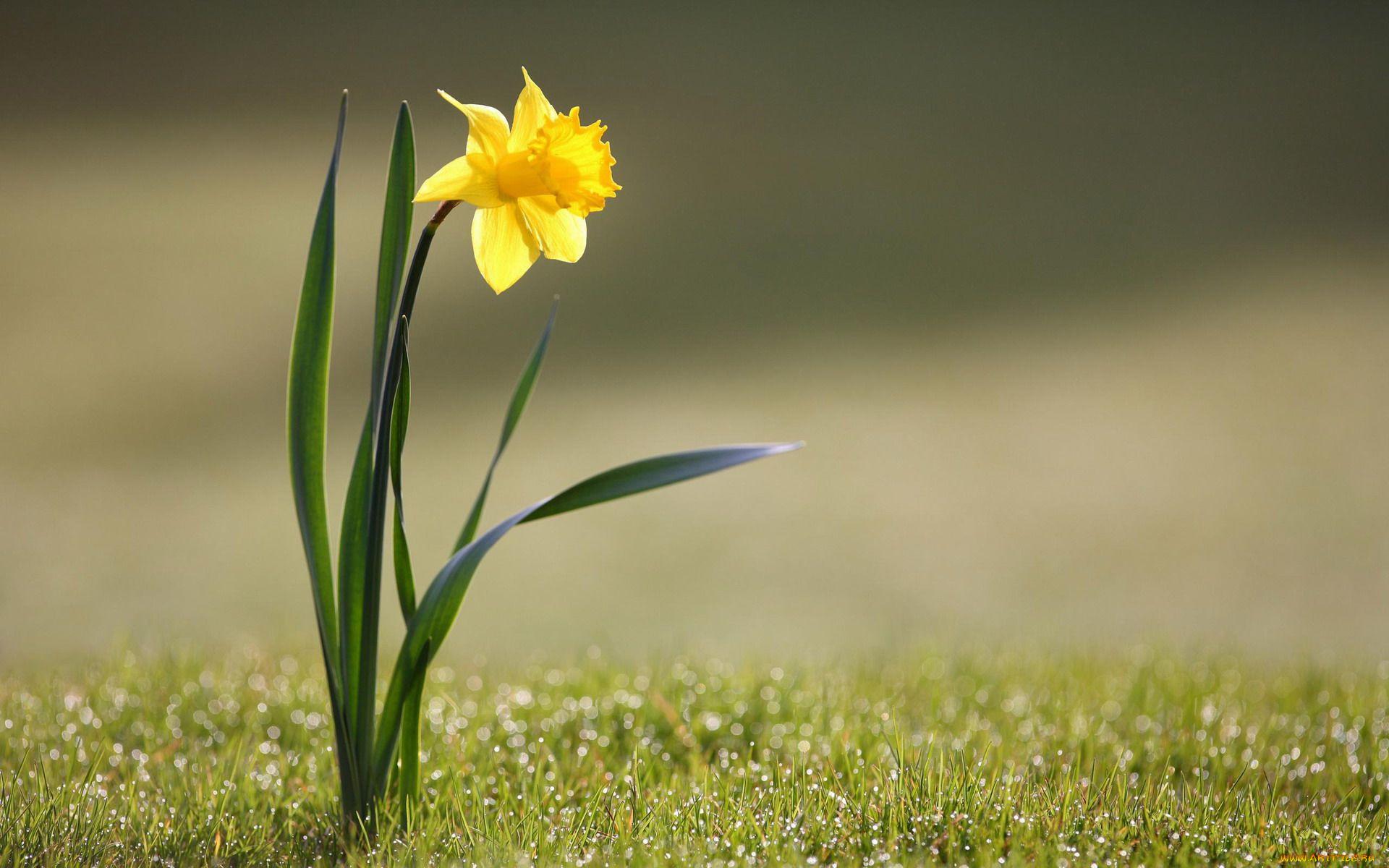 Вырастающий цветок картинка